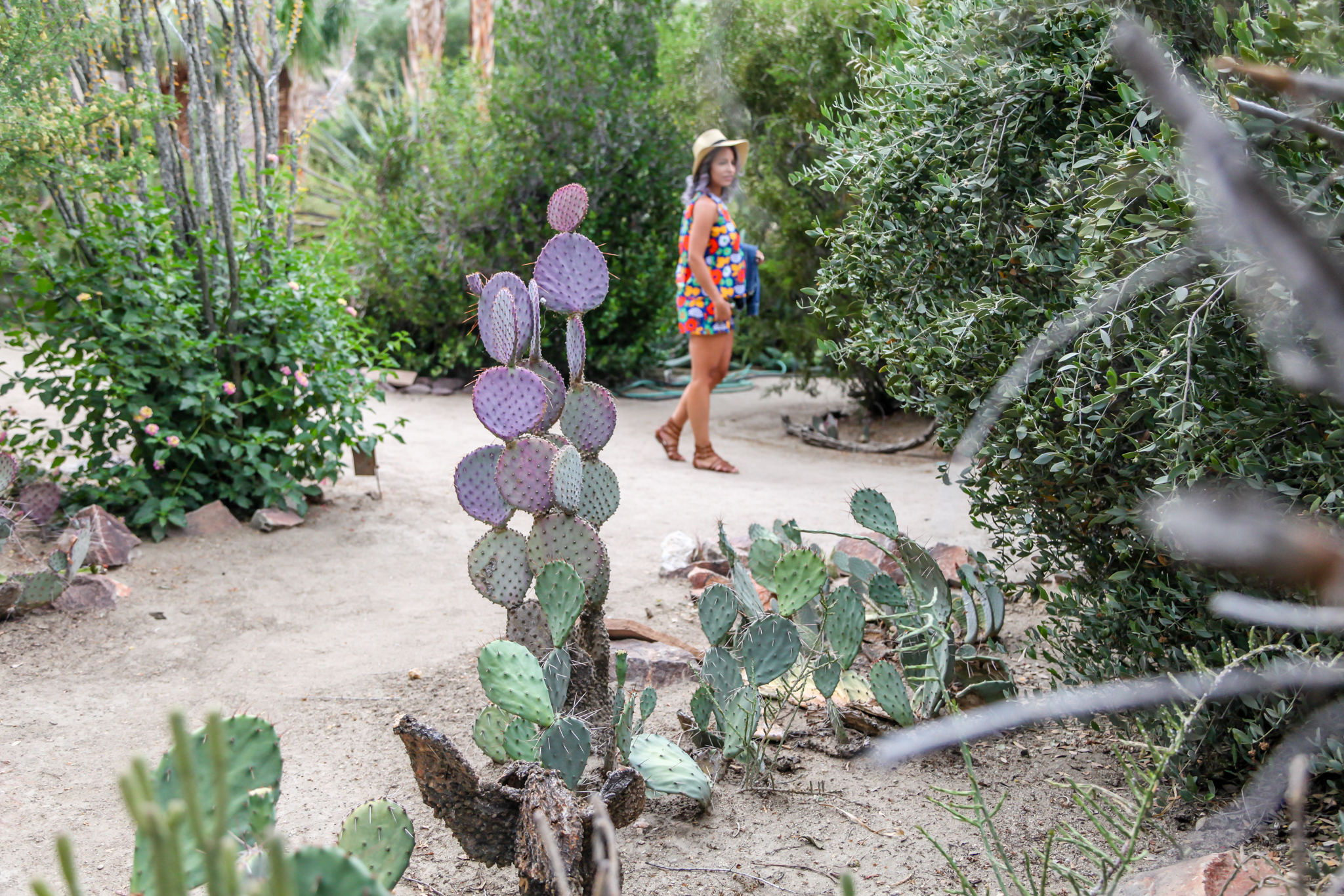 Walking Cactus Garden Purple Cactus Palm Springs