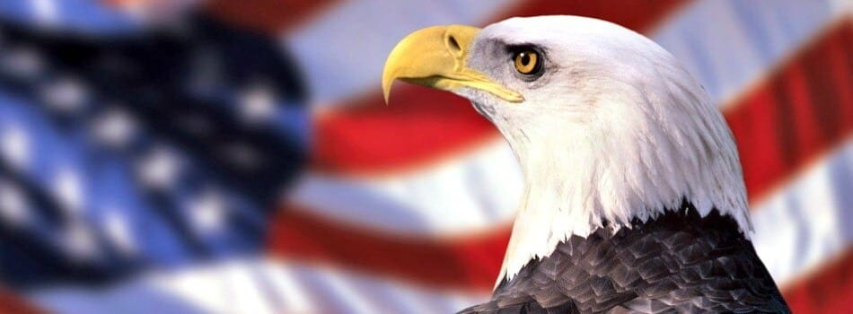 Bald-Eagle-Wallpaper-e1426894426422-950x350_c