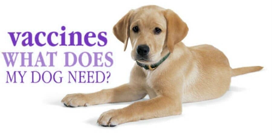 Where Can You Buy Rabies Vaccine For Dogs