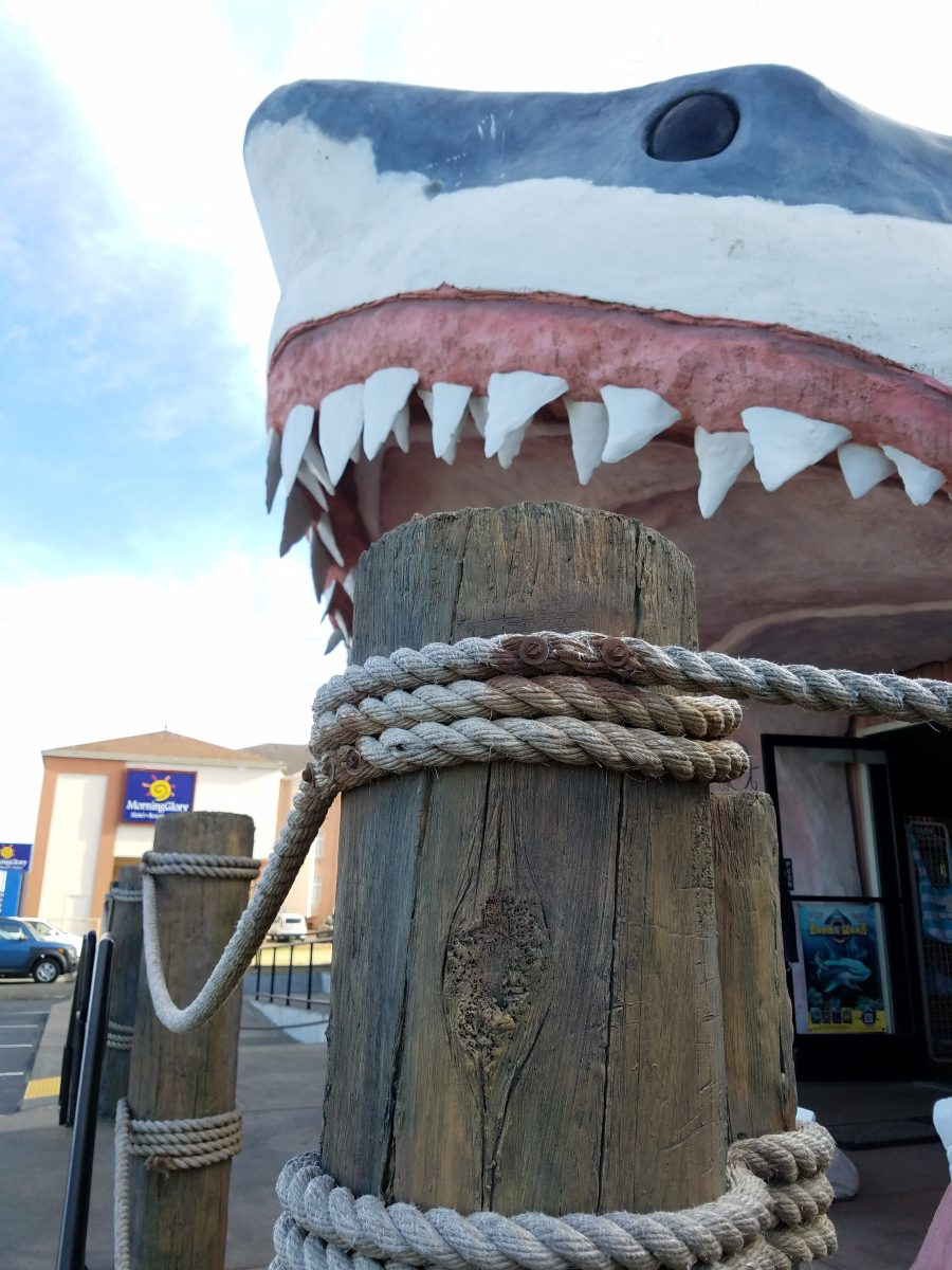 Day trip to Ocean Shores - must see/do ideas and tips for the best time!