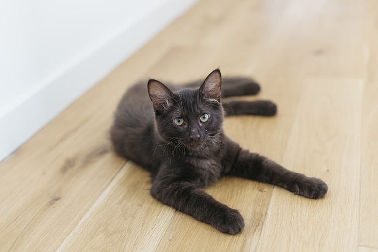 Lovetralala_Cookie Pepita le chat d'Elodie Love et Tralala
