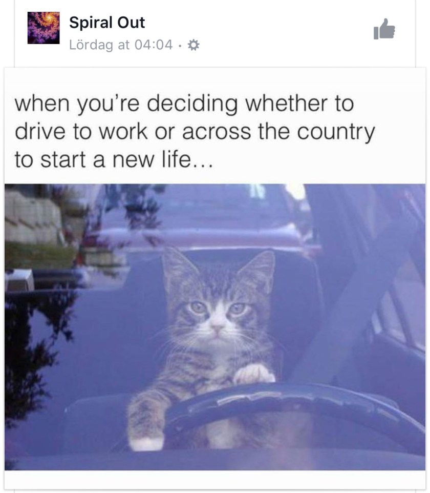 This cat. This expression. This caption. You nailed it Spiral Out.