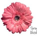 """4"""" Spring Daisy Flower Hair Clip $6.25 a dozen"""