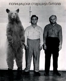 Bear in a Lineup