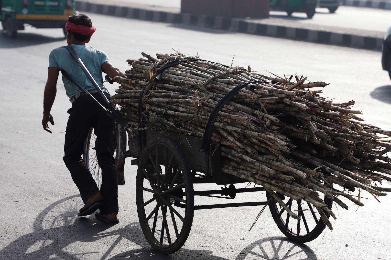 After the harvest, sugarcane in New Delhi in March (Photo: filled with sugarcane in New Delhi, India, on 29 March 2019. (Photo by Nasir Kachroo via Getty)
