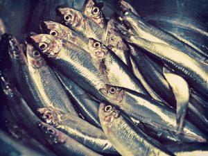fish-448556_1920