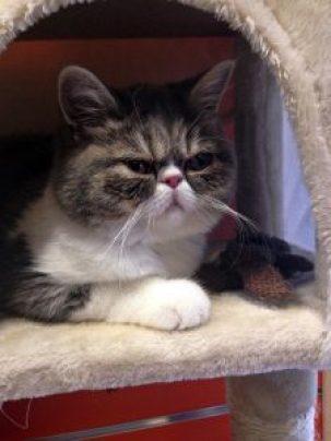 cat-1599158_640