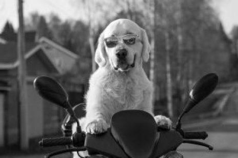 dog-2537902_640
