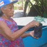 Planta medicinal do grupo GCEM