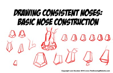 Drawing Consistent Noses - Basic Nose Construction