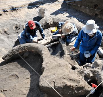 Excavación Mamut México