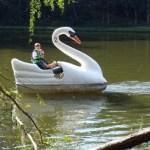 I giganti cigni sul lago incantato