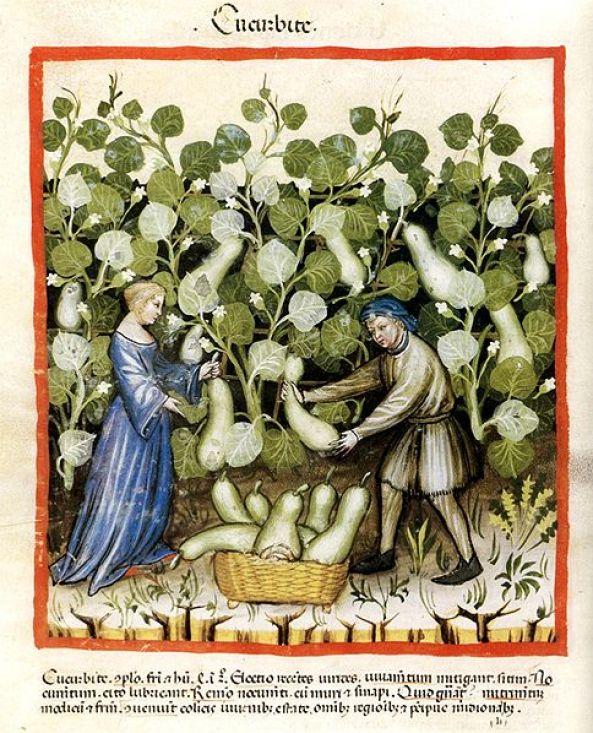 Raccolta dei cetrioli, Tacuinum sanitatis vindobonensis, Österreichische Nationalbibliothek, Vienna