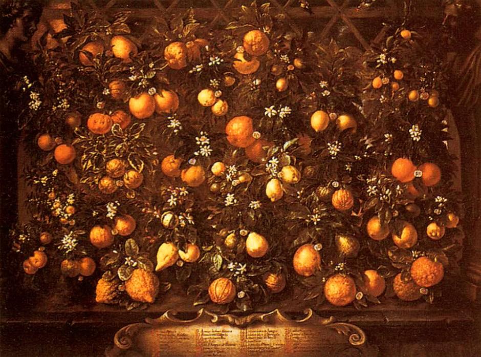 Bartolomeo Bimbi, pianta di limone