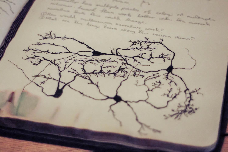 aaron-bradbury-neuron-sketch-ramon-y-cajal_multi