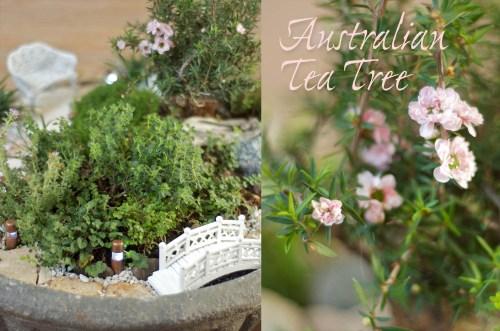 Medium Of Fairy Garden Trees