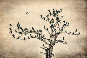 fccc birds