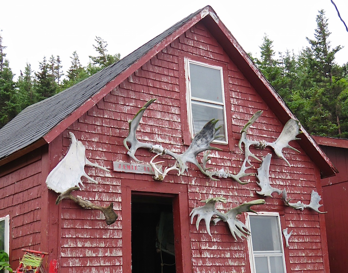The moose antlers tacked to the front of a boat shed at White Point Harbor gave us hope that we might see a moose on the trail, but it was not meant to be.