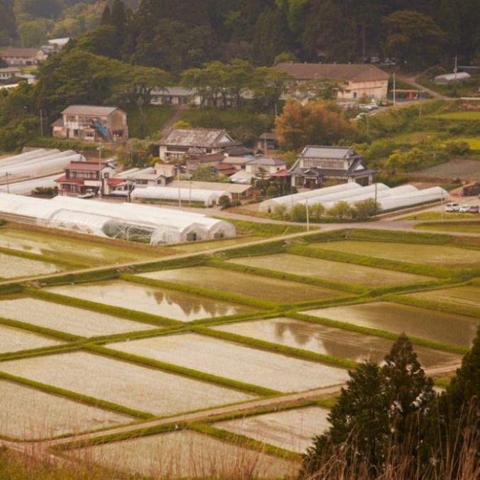 入谷地区で体験。田舎の夏休み。
