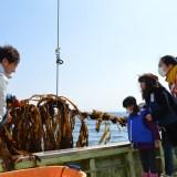 極上!三陸ワカメ収穫体験2017