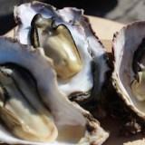 【2月26日開催】志津川湾牡蠣まつり福興市