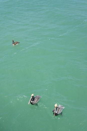 Naples, Floride - la plage et les pélicans