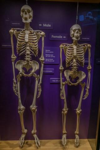 Musee des sciences de Boston-5