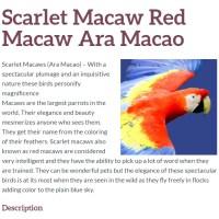 scarlet macaw, parrot, bird, ara macao