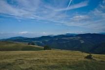 Wilde Kaparten 30 Minuten von Sibiu entfernt