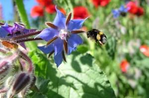 flowersandbee