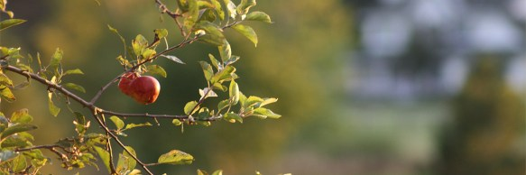 apple-tree-wels-net-flickr-creative-commons