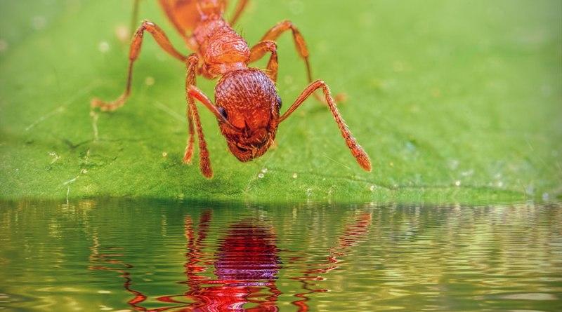 Ant Fun