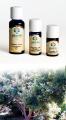 Cannella Foglie - Olio Essenziale 10 ml. (3130-10)