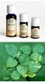 Patchouli - Olio Essenziale 10 ml. (2400-10)