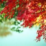 {the fresh air of fall.}