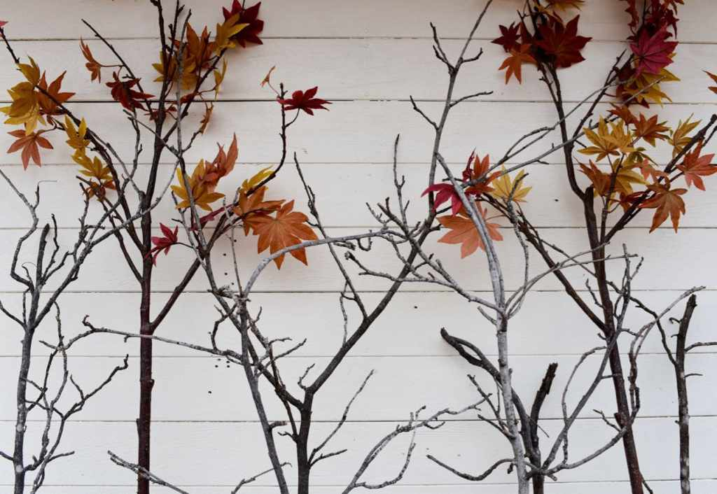 DIY backdrop for a hautned forest Halloween party