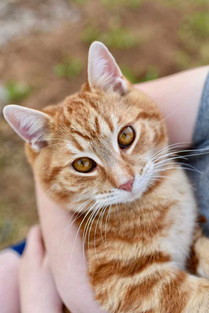 Keeping our cats healthy with IAMS