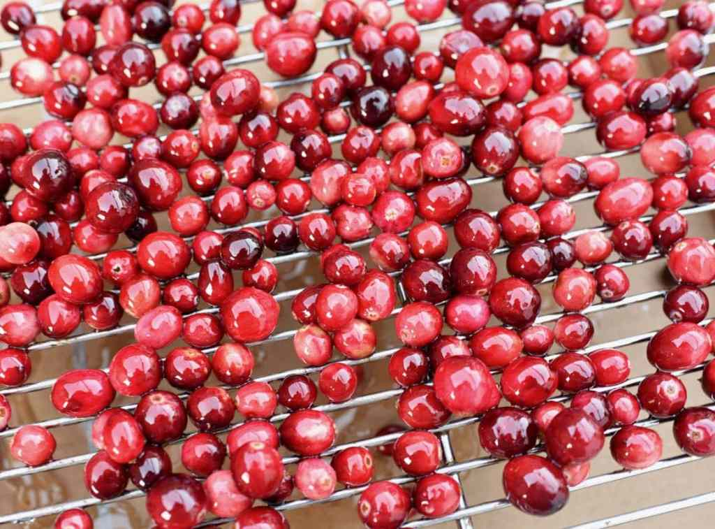 Sugared cranberries drying for orange cranberry bundt cake