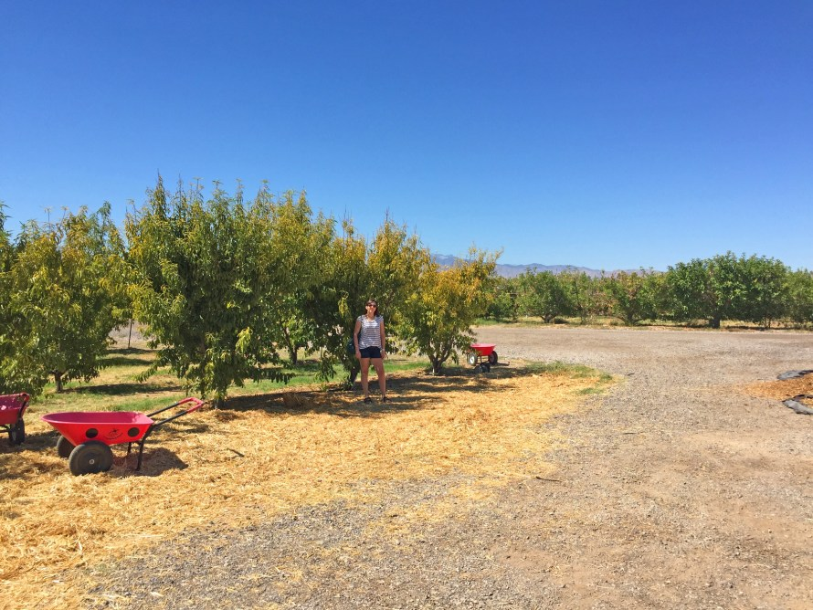 Gilcrease Orchard