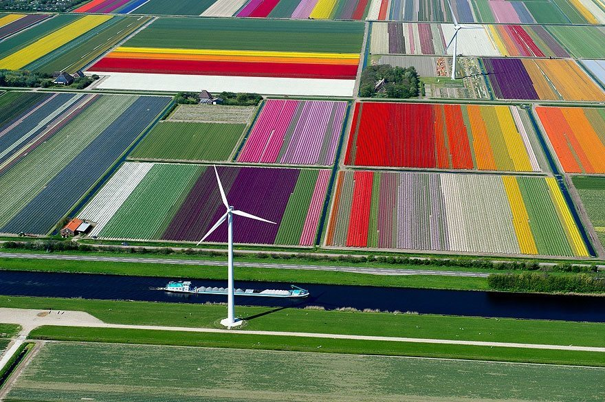 Tulip-Fields-Holand