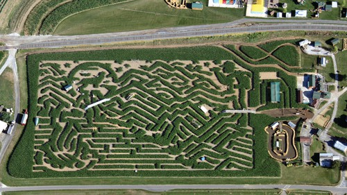 cherry crest adventure farm amazing maize maze