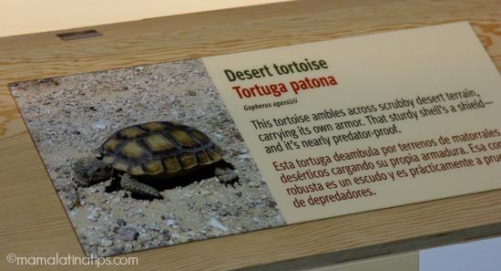 Tortoise display at ¡Viva Baja! Exhibition at Monterey Aquarium - mamalatinatips.com