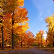 L'automne est arrivé, ça se fête ! (Newsletter des Mamans Qui Déchirent)