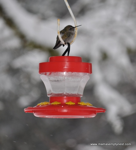 Hummingbird on feeder Eugene 12_6_2013
