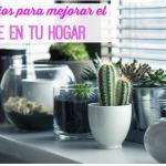 6 consejos para mejorar el aire en tu hogar