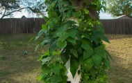 Beyond Organic Gardening with the Tower Garden System