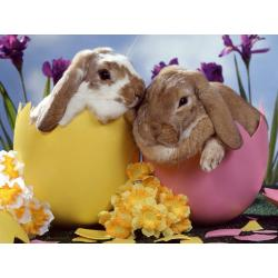 Small Crop Of Easter Bunny Pictures