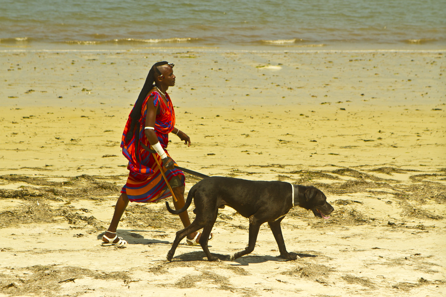 Masaii Warrior Walks His Dog