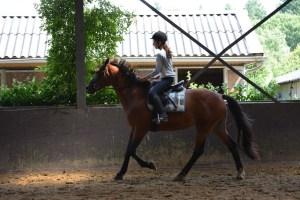 ponykamp 2015 (248)