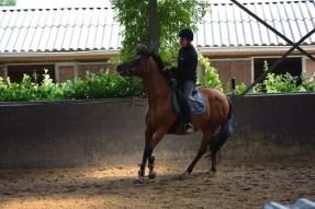 ponykamp 2015 (249)